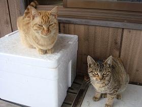 丸光水産直売所 のネコ達.jpg
