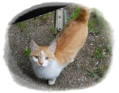 我が家の野良猫ちゃん .jpg