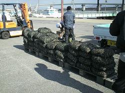 手掘り漁.jpg