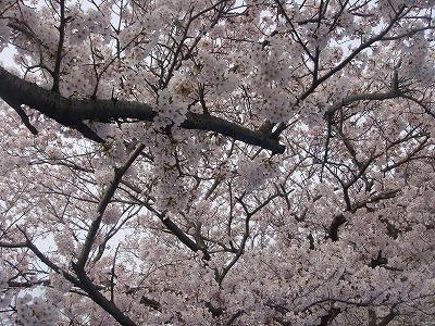 桜 一色町