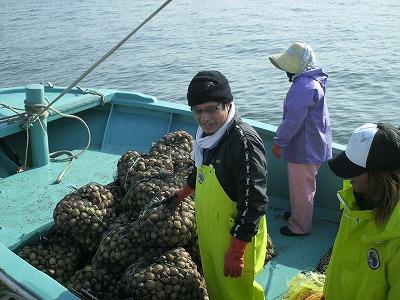 手三貝 トリ貝漁
