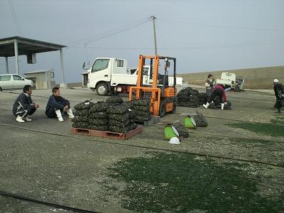 吉田漁港 買付現場
