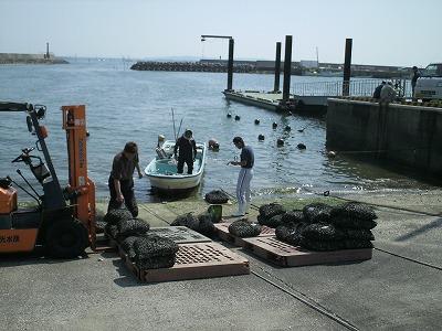 丸光水産 in吉田漁港